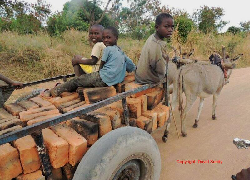 Donkeys in African Communities