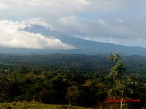 Die Wälder Tansanias